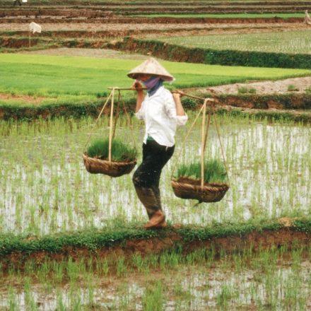 Preço global dos alimentos cai 4,3% em março, ante fevereiro