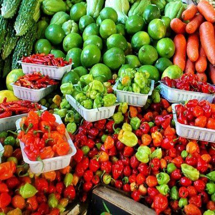 FAO lança site que compila políticas públicas para alimentação no mundo