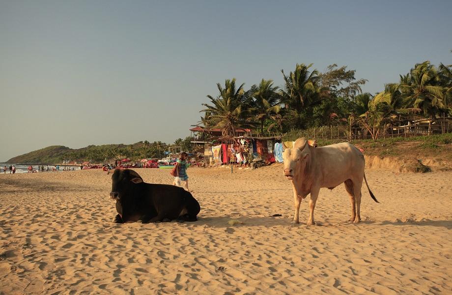 Em Goa, na Índia, partido quer regulamentar a siesta após o almoço
