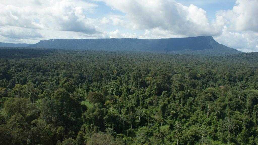 Exploração ilegal de madeira gera prejuízo e causa destruição no Suriname